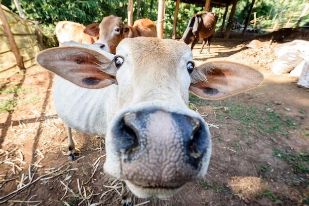 Cara divertida vaca en la naturaleza