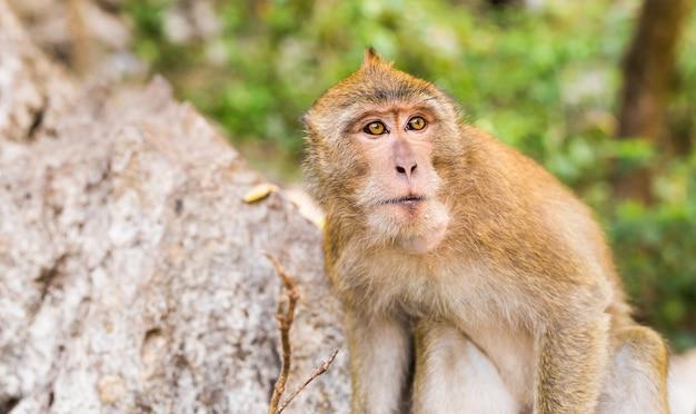 Cara de mono de cerca