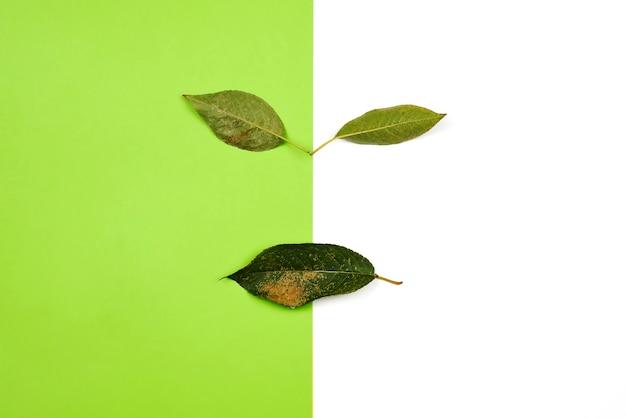 Cara de naturaleza creativa hecha con hojas verdes sobre un fondo brillante. concepto de cara de la naturaleza