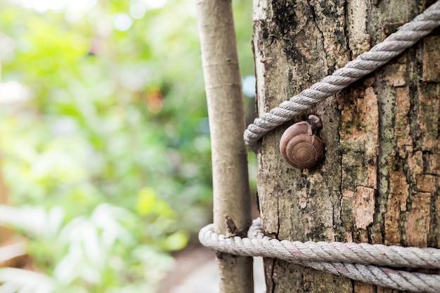 Caracol en el árbol en el jardín.