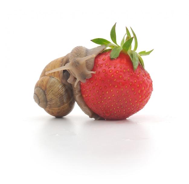 Caracol y fresas aisladas