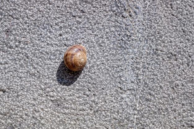 Un caracol solitario escondido dentro de su caparazón, pegado a una pared al sol en verano.
