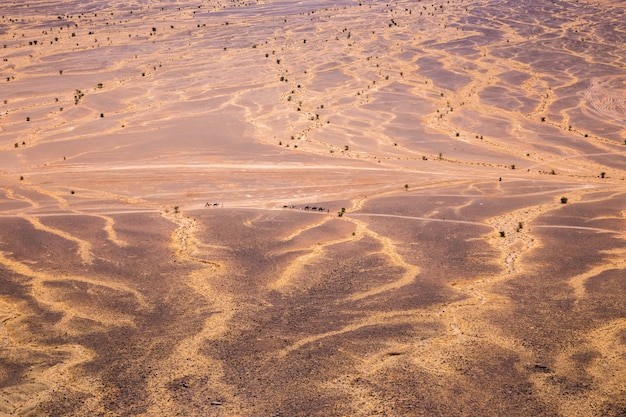 Caravana de camellos en el desierto del sahara.