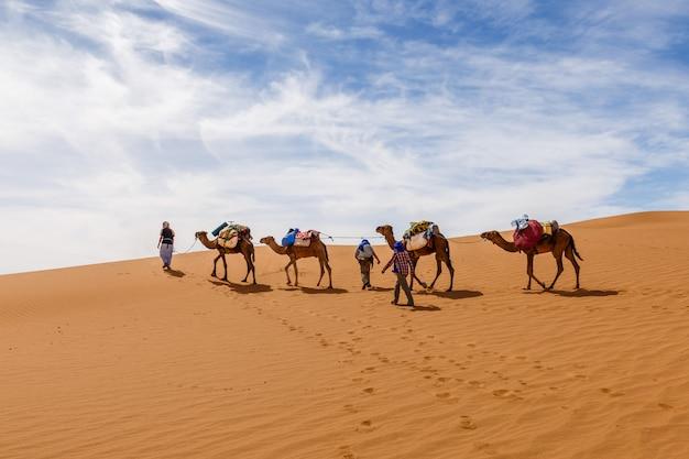 Caravana de camellos en el desierto del sahara