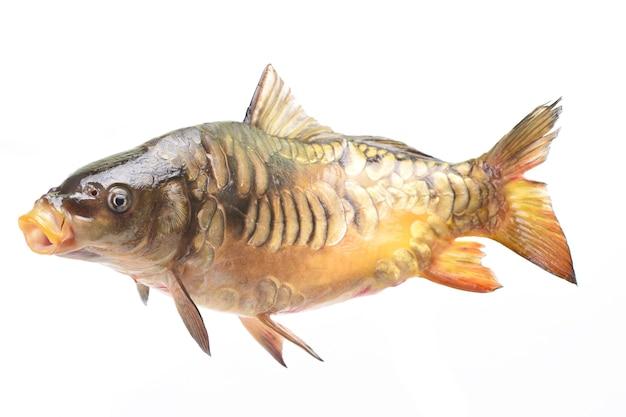Carpa de pescado