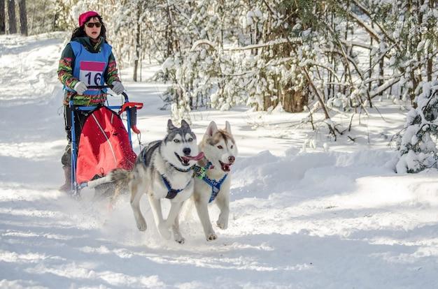 Carrera de trineos tirados por perros. mujer musher y husky trineo de perros del equipo.