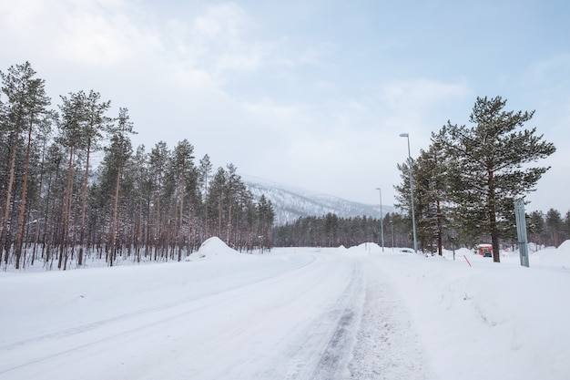 Carretera asfaltada cubierta de nieve con arbol en lado