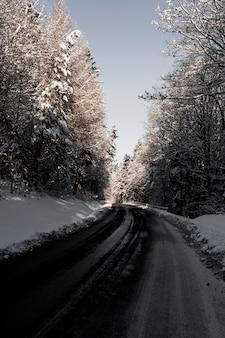 Carretera de asfalto en el bosque de invierno