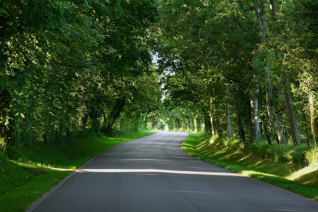 Una carretera de asfalto con curvas a través de un bosque verde.