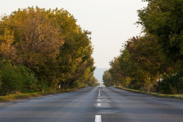 Carretera de asfalto a lo largo de los árboles y contra el cielo despejado