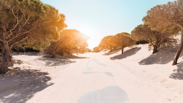 Carretera desierta entre árboles en día soleado brillante