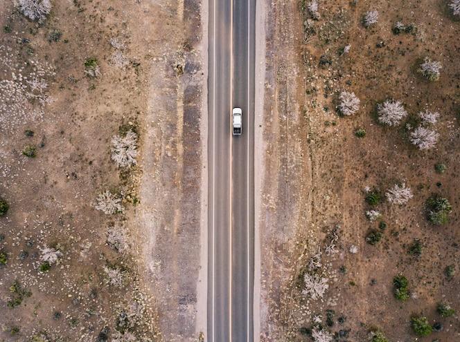 Carretera del desierto con arbustos y cactus aéreos