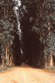 Carretera directa con filas de árboles izquierda y derecha
