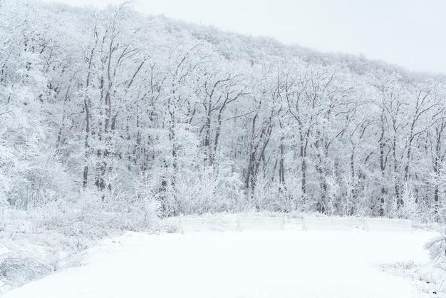 Carretera de montaña nevada en bosque de invierno
