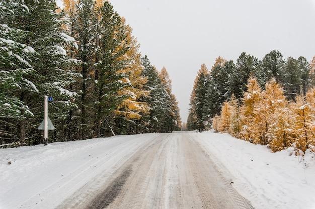 Carretera de montaña a través del bosque de alerces y abetos en invierno