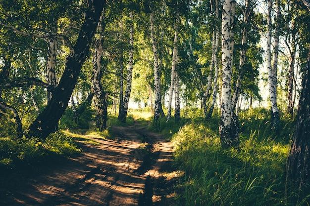 Carretera nacional sucia entre muchos árboles.