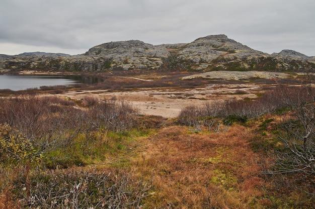 Carretera norteña entre colinas con coloridos árboles de otoño de tundra y arbustos en un día nublado. viaja a teriberka. península de kola, región de murmansk, rusia.