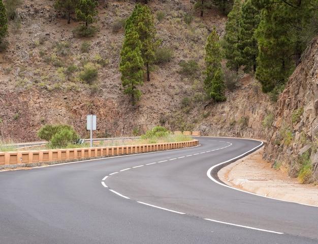 Carretera rodeada de pinos
