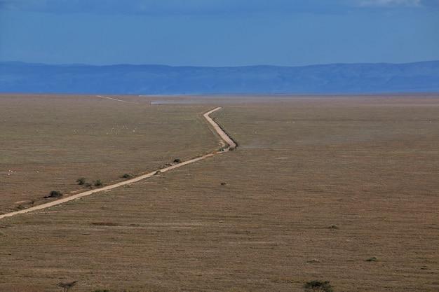 Carretera en sabana en kenia y tanzania, áfrica