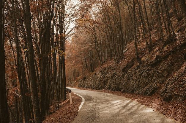 Carretera vacía entre árboles altos en el bosque durante el día en otoño
