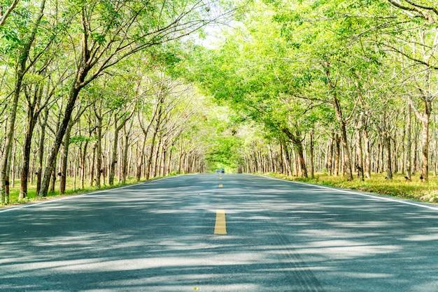 Carretera vacía con arco de árbol o túnel