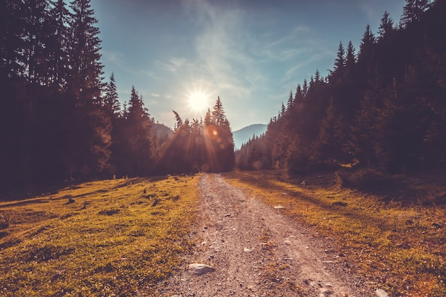 Carretera vacía en bosque de pinos. paisaje de la naturaleza