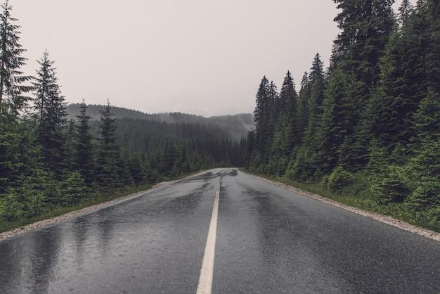 Carretera vacía en paisaje forestal