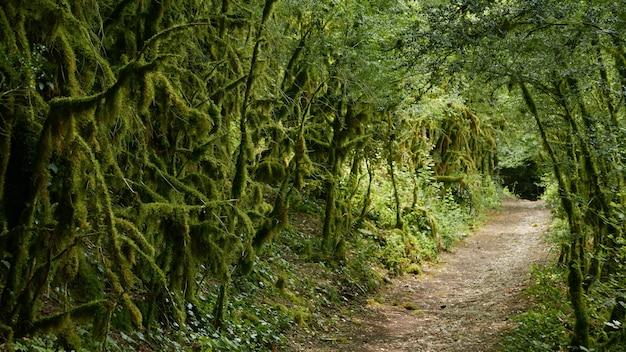 Una carretera vacía rodeada de árboles verdes cubiertos de musgo.