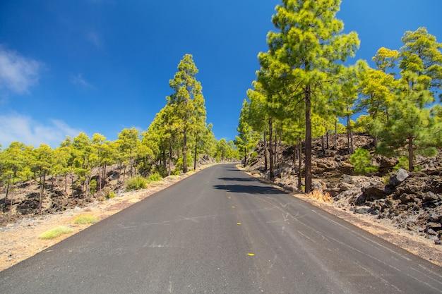 Carretera vacía a través del bosque volcánico en la isla de tenerife, españa