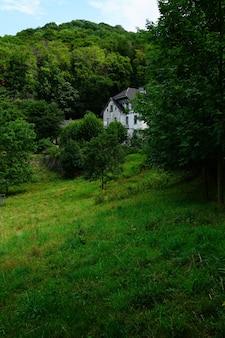 Casa blanca en el bosque lleno de árboles verdes