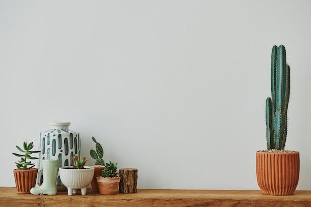Casa estética con cactus y plantas en un estante de madera.