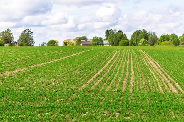 Casa del granjero en la distancia. paisaje rural con campo cultivado. campo arado y sembrado
