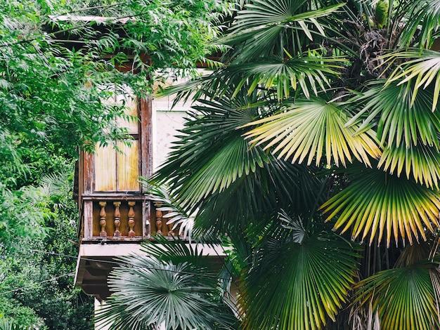 Casa de madera de estilo vintage con grandes ventanales en bosque tropical con fondo de hojas de palmera
