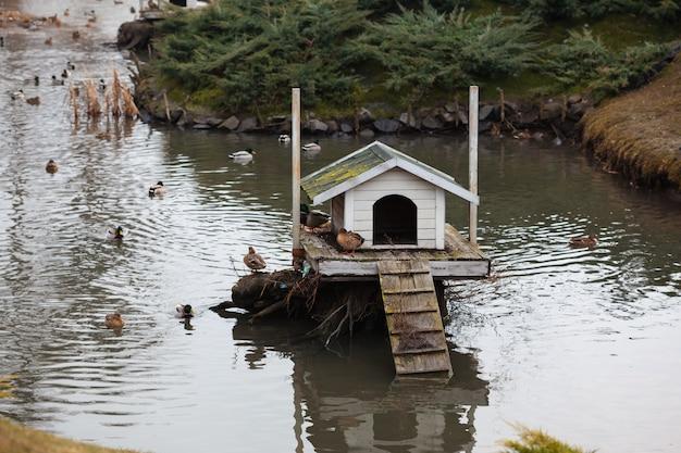 Casas de pájaros flotando en el estanque
