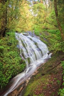 Cascada en el bosque de hoja perenne de la colina de doi inthanon, chiang mai, tailandia