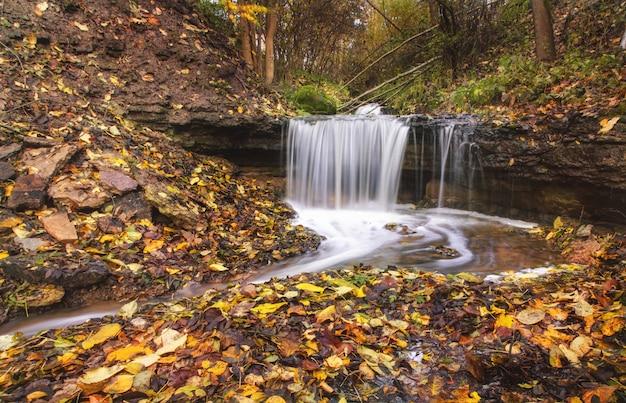 Cascada y corriente del río en el bosque