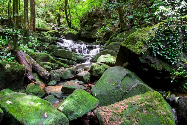 Cascada entre naturaleza verde musgo y roca.