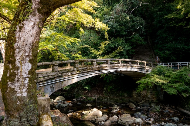 Cascada del parque minoh. osaka, japón