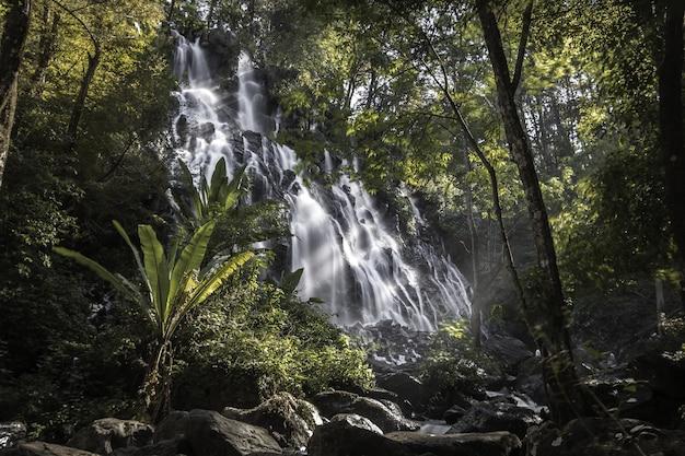 Cascada que atraviesa el bosque rodeada de árboles.