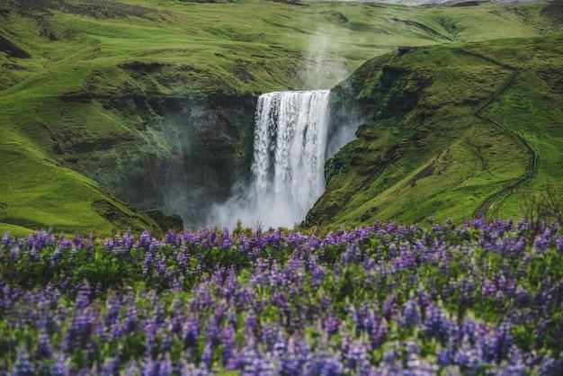 Cascada de skogafoss en islandia en verano.