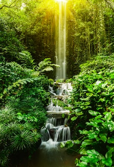 Cascada tropical