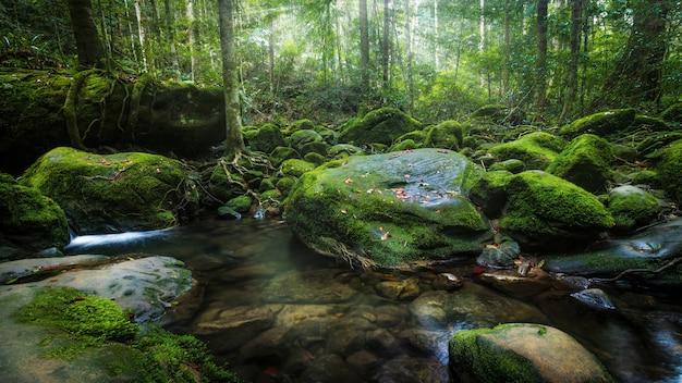 Las cascadas en el norte de tailandia están cubiertas de musgo y plantas.