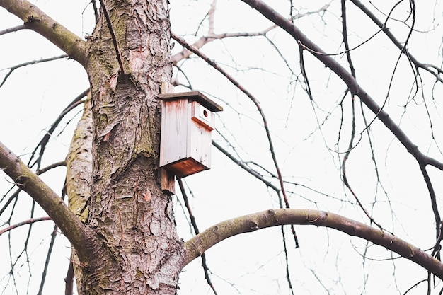Casita para pájaros en el árbol a principios de primavera u otoño aves y naturaleza