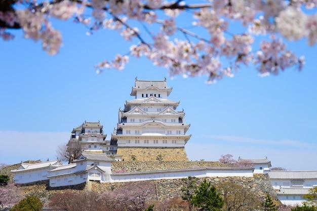 Castillo de himeji con cielo azul y sakura o flor de cerezo en primer plano.