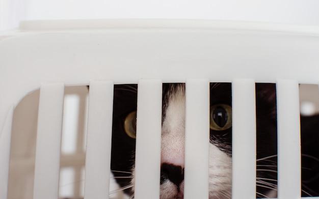 Cat en la mano y la cantera de viaje para mascotas portrable pet