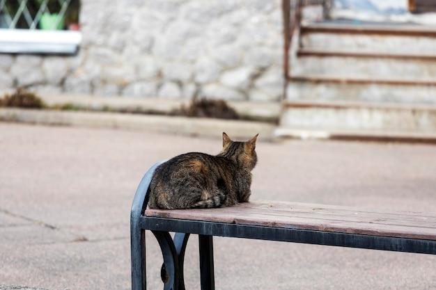 Cat se sienta en un banco cerca de la casa, de espaldas a la cámara. foto de alta calidad