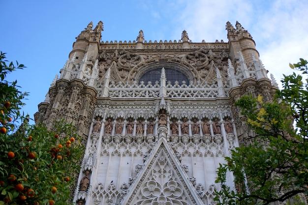 Catedral de santa maría de la sede de sevilla, en andalucía, españa. el edificio gótico se ve detrás de naranjos verdes.