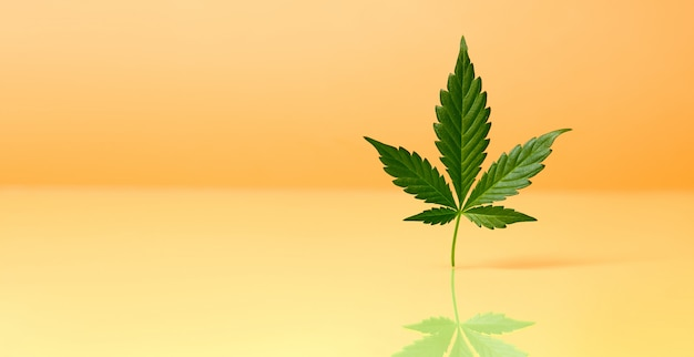 Cbd aceite de cáñamo, goteo, biomedicina y ecología, planta de cáñamo, hierba, medicina, aceite de cannabis de extracción médica