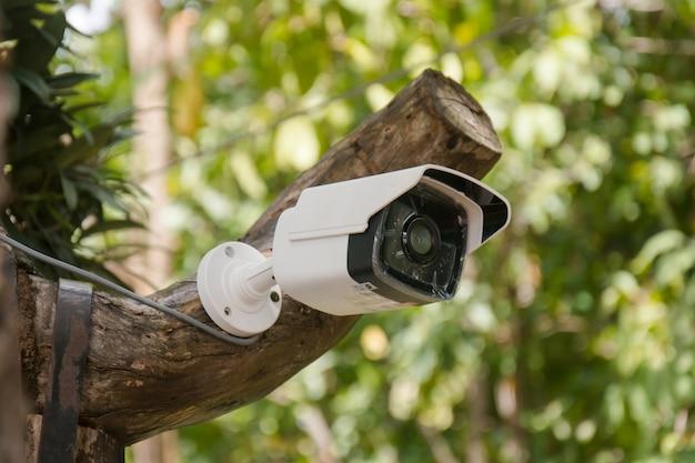 Cctv blanco instalado en el árbol