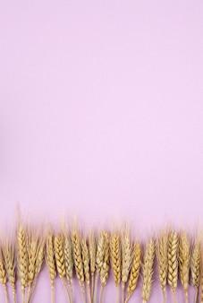 Cebada en rosa